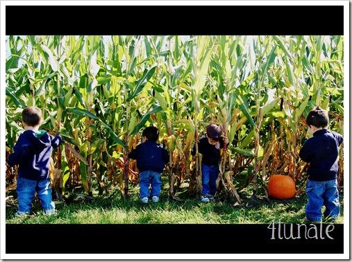 corn5