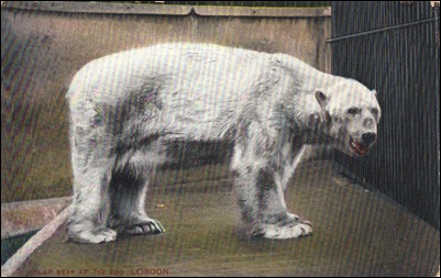 polarbearlondon