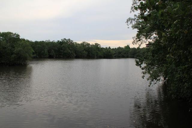 afternoon at Sungei Buloh