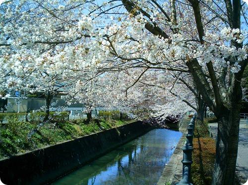 More Ashikaga 022