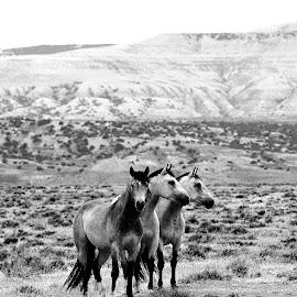 by Matt Myers - Animals Horses (  )