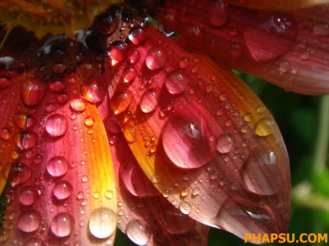 Beautiful_Dew_Drops_Macro_Photographs_1_26.jpg