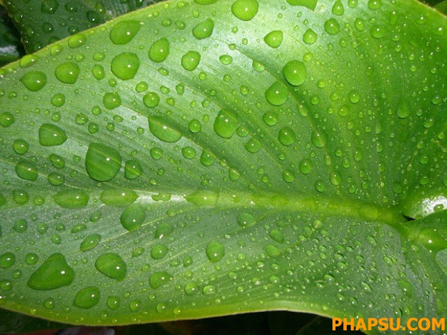 Beautiful_Dew_Drops_Macro_Photographs_1_35.jpg