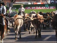 stockyard-station-cattle-3