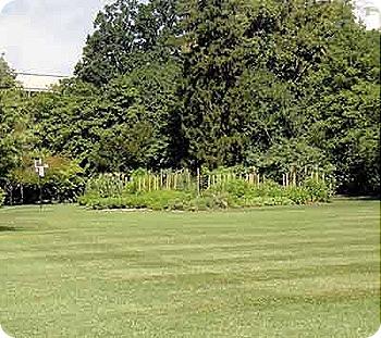 kitcen-garden