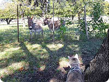 bella-and-donkeys