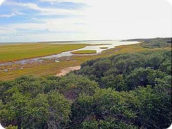 marsh-land