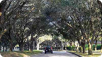 tree-road-2
