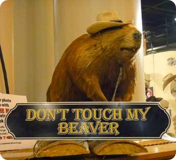 18-beaver