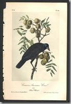 Audubon birds2