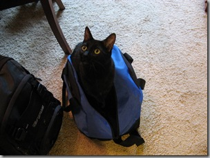 Sheeba in a bag