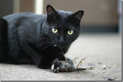 Cat-eating-prey