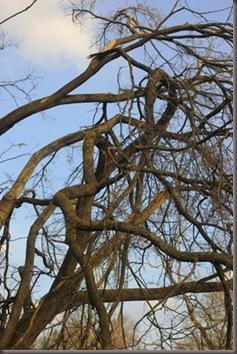 brokentrees2