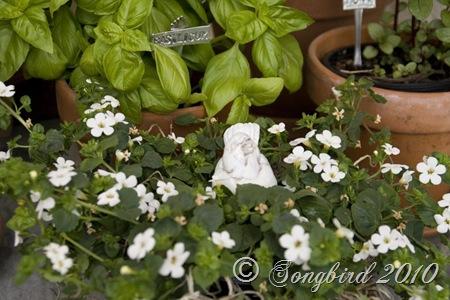 Herb Garden4