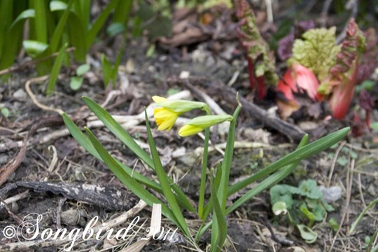 Garden Spring 3