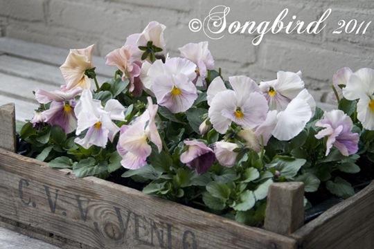 Garden Spring 1