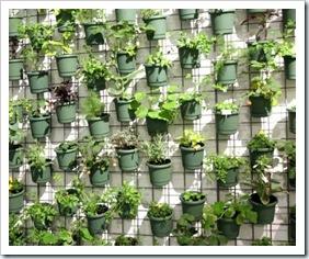 plantas_na_parede