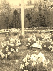 daffodilscross