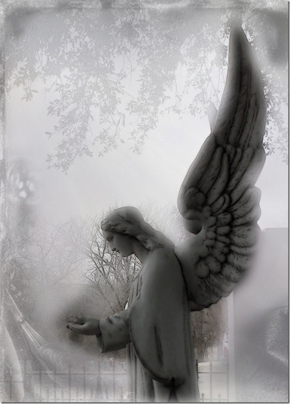 Angel Wings 3