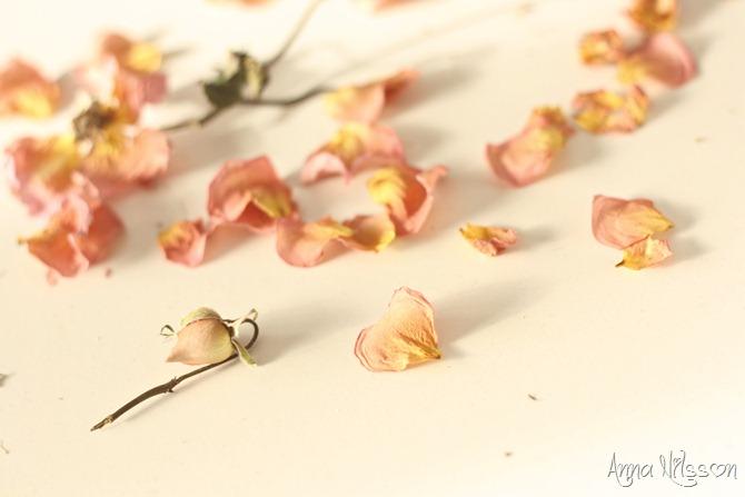 rosblad