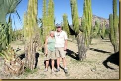 11 Cactus San Carlos (4a)