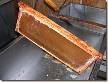Uncapped honey frame