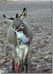 Donkey -Feeder