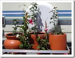 Plants & boug 017-2