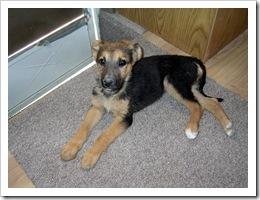 Tasha 3 weeks after being found 006