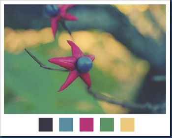 blissful-images-color