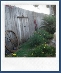 Backyard decorations