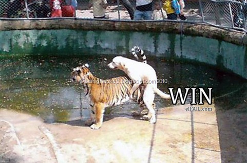 WIN-Un-Perro-Muy-Chingón