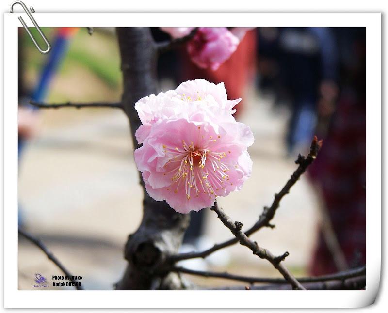 最简单的梅花图片