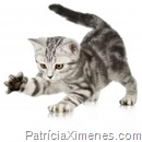 Mania de gato