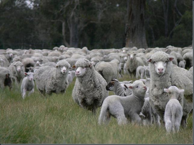 ewes lane