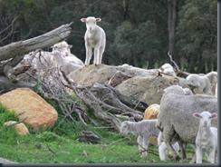 lamb rock