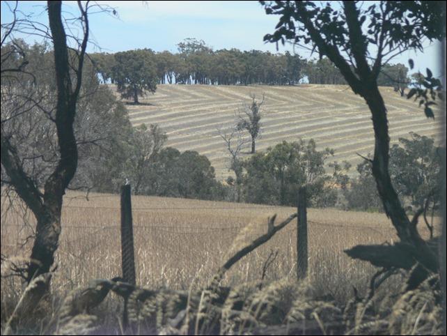hill scene