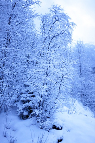 Vinterlykke2