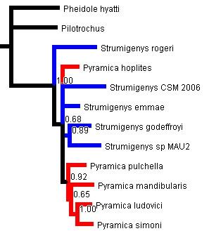 phylogeny1.jpg