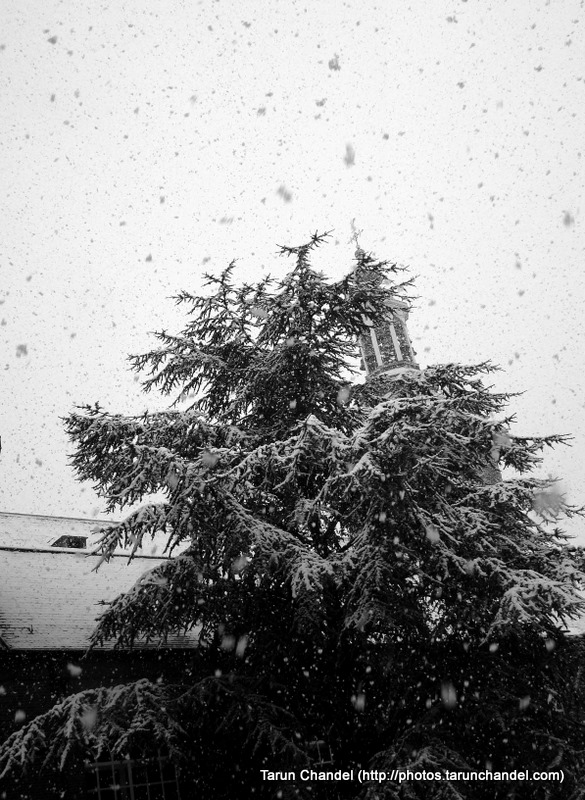 Snow Winters Snowfall Dutch Church Holland Christmas Tree Netherlands Christmas Tree, Tarun Chandel Photoblog