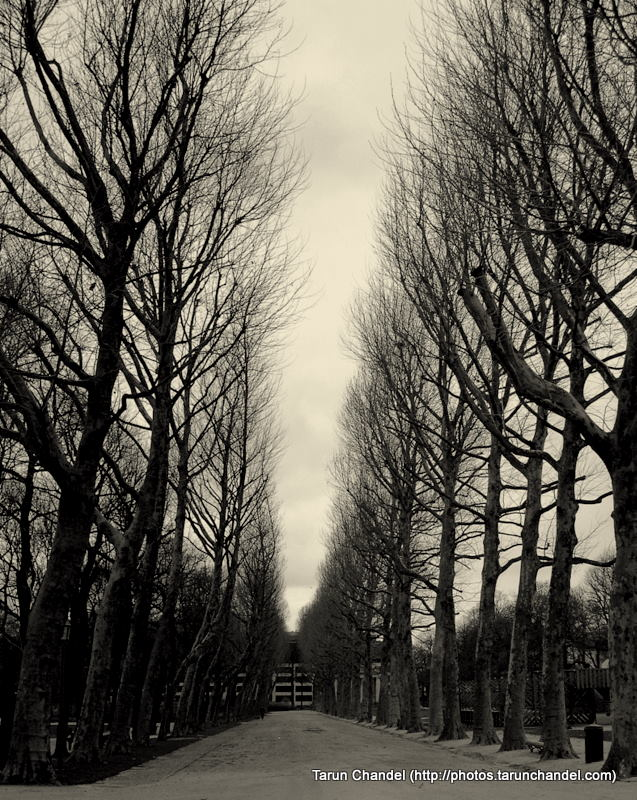Trees Winters Belgium Brussels, Tarun Chandel Photoblog