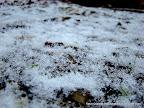 Fresh Snow, Tarun Chandel Photoblog