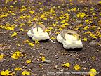 Follow My Steps, Tarun Chandel Photoblog