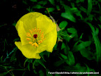 Yellow Flower, Tarun Chandel Photoblog