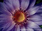 resh Lotus Flower Center, Tarun Chandel Photoblog