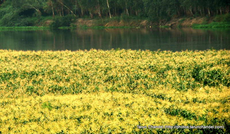 Green Garden, Tarun Chandel Photoblog
