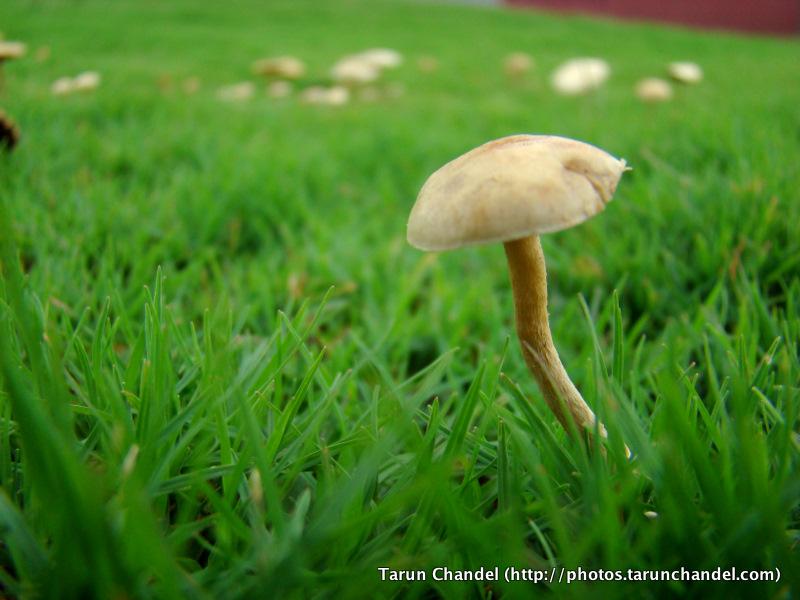 Mushroom, Tarun Chandel Photoblog