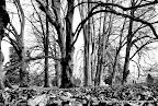 Swiss Jungle BW HDR, Tarun Chandel Photoblog