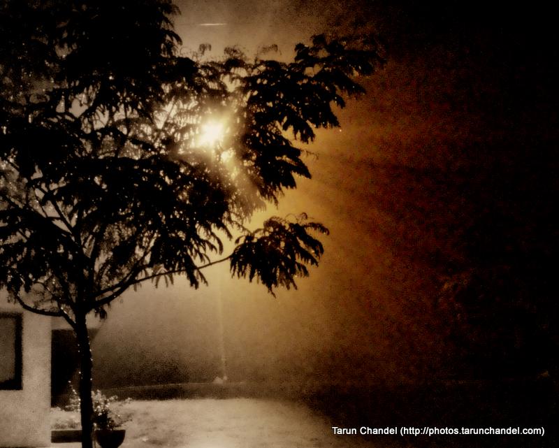 Night Tree, Tarun Chandel Photoblog