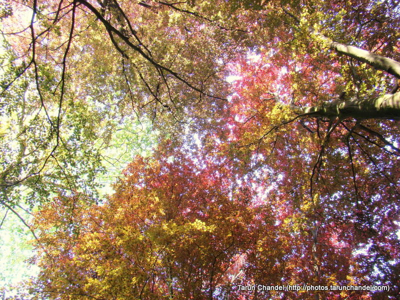 Colored Leaves, Tarun Chandel Photoblog